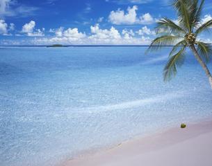 椰子と海の写真素材 [FYI03943631]