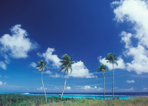 ヤップ島の写真素材 [FYI03943633]