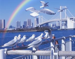 虹とお台場のカモメの写真素材 [FYI03943656]
