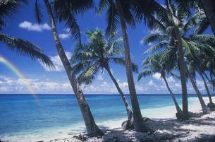 椰子の島の写真素材 [FYI03943680]