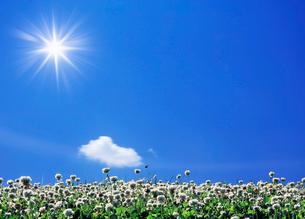 雲とクローバーの畑の写真素材 [FYI03943738]