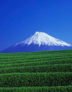 富士山と新茶畑の写真素材 [FYI03943745]