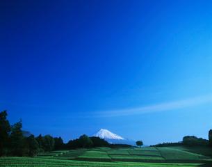 富士山と新茶畑の写真素材 [FYI03943749]