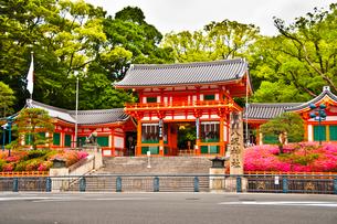 つつじ咲く八坂神社 西楼門の写真素材 [FYI03943879]