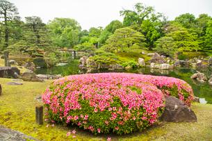 つつじ咲く二条城二の丸庭園の写真素材 [FYI03943886]