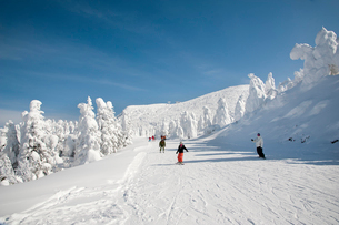 樹氷原コースのスキーヤーの写真素材 [FYI03943950]