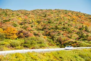 秋の蔵王エコーラインの写真素材 [FYI03944000]