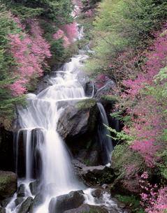 山ツツジと竜頭の滝の写真素材 [FYI03944228]