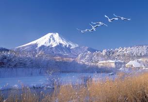 雪景色と鶴の写真素材 [FYI03944512]