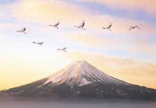 化粧富士とタンチョウヅルの写真素材 [FYI03944518]