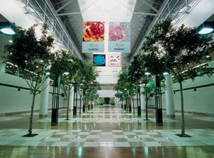 中部国際空港 センターピアガーデンの写真素材 [FYI03944891]