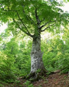 樹木の写真素材 [FYI03944923]