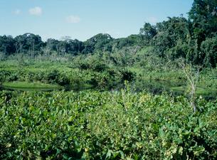 アマゾンの熱帯雨林の写真素材 [FYI03945087]