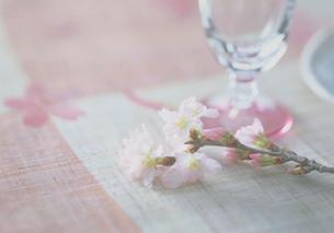 桜柄のクロスと彼岸桜の写真素材 [FYI03945205]