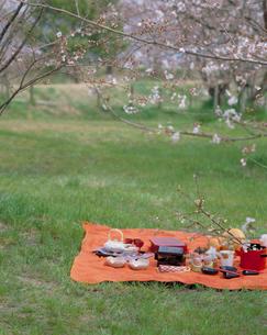 ソメイヨシノとお花見の風景の写真素材 [FYI03945209]