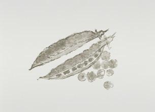 イラスト  さやえんどうのイラスト素材 [FYI03946572]