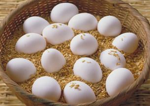 卵の写真素材 [FYI03947140]