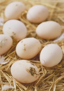 卵の写真素材 [FYI03947143]
