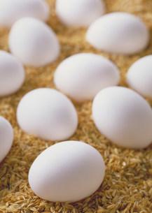 卵の写真素材 [FYI03947144]
