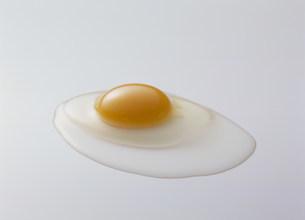 卵の写真素材 [FYI03947145]