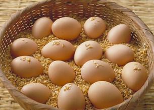 卵の写真素材 [FYI03947148]