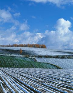 初冬の丘の写真素材 [FYI03947665]