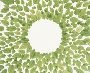 丸形に並べられた若葉の写真素材 [FYI03947931]