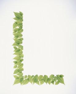 L字型に並べられた若葉の写真素材 [FYI03947932]