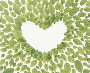 ハート形に並べられた若葉の写真素材 [FYI03947933]