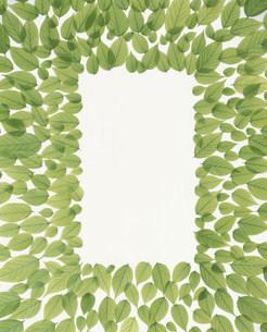 角形に並べられた若葉の写真素材 [FYI03947934]