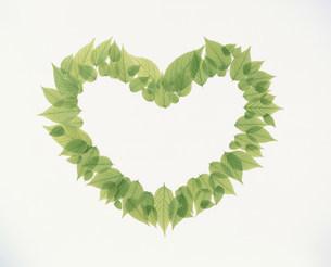 ハート形に並べられた若葉の写真素材 [FYI03947939]