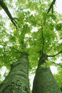 木々の写真素材 [FYI03948730]