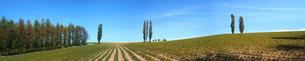 平原と木々の写真素材 [FYI03948733]