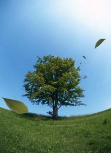 木の写真素材 [FYI03948739]