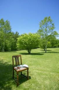 木陰の中の椅子の写真素材 [FYI03948946]