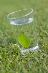 グラスの中の葉の写真素材 [FYI03948948]