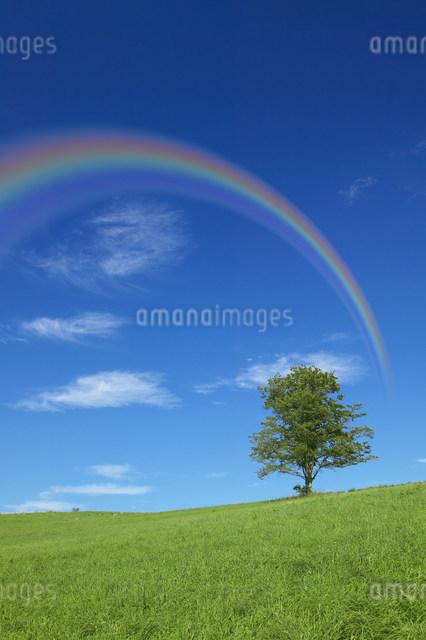 虹の写真素材 [FYI03949029]