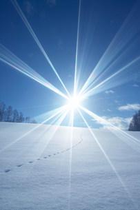 雪原の足跡の写真素材 [FYI03949172]