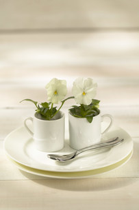 花と食器の写真素材 [FYI03949347]