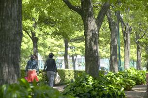 並木道を歩く人の写真素材 [FYI03949418]