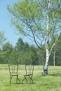 芝に椅子の写真素材 [FYI03949436]