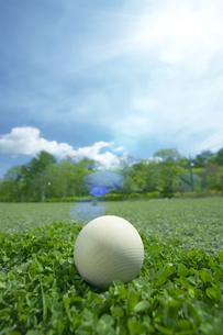 芝に木製の玉の写真素材 [FYI03949444]