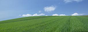 高原の青空の写真素材 [FYI03949518]