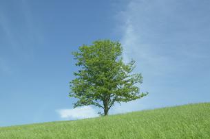 高原の一本木と青空の写真素材 [FYI03949525]
