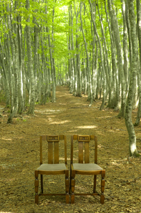 ブナの林と椅子の写真素材 [FYI03949604]