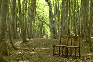 ブナの林と椅子の写真素材 [FYI03949609]