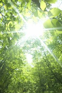 木漏れ日の写真素材 [FYI03949613]