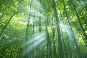 森に差す光の写真素材 [FYI03949664]