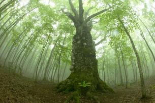 林の中の大きな木の写真素材 [FYI03949682]