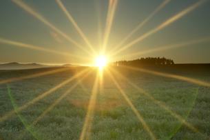 草原に差す太陽の光の写真素材 [FYI03949687]